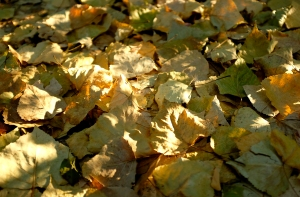 leafs on the ground